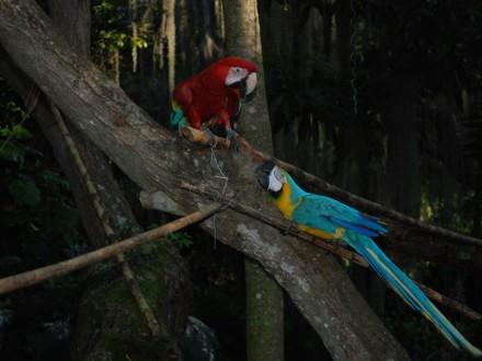 parque-gallineral-san-gil-santander-colombia